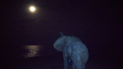 Noche Playa Amplàries